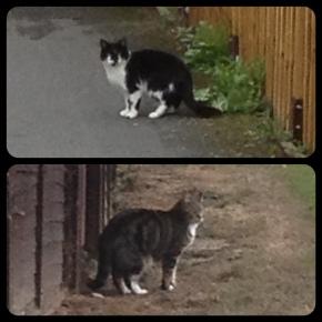 2 puss-cats