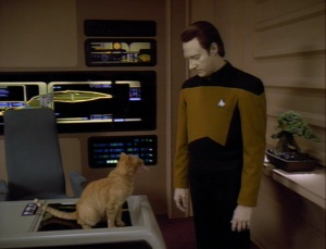 Data and spot