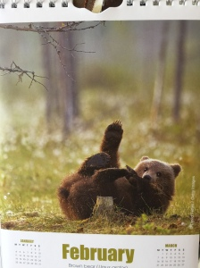 feb bear yoga