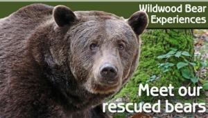 Bear-experience-524x300