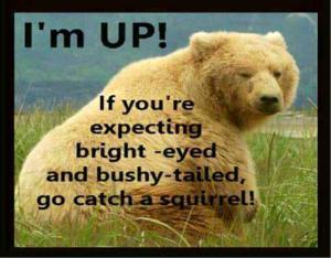 not-a-morning-bear-funny-164755814308