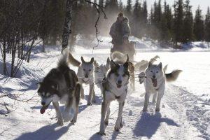 sweden-lapland-husky-sledding-rth-600x0-c-default