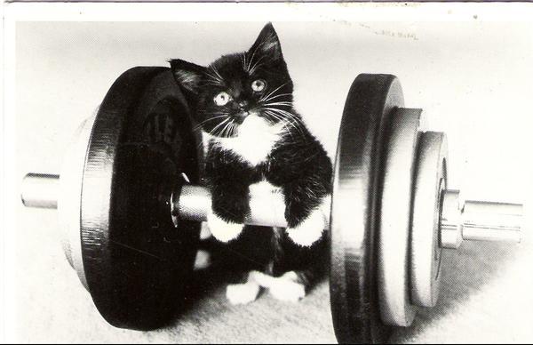 strong kitten